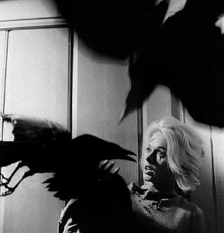 Le mystère des «Oiseaux» d'Hitchcock enfin élucidé   Poèmes d'avenir, du présent, du passé.   Scoop.it