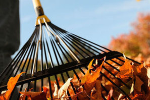 Leaves Make Great Organic Mulch and Compost   Landscape Management   Scoop.it