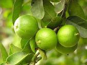 Secret Benefits of Lemon for Health | Keep Healthy Tips | Keep Healthy | Scoop.it