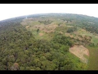Conservationists Launch Cheap Drone to Monitor Deforestation and Endangered Species | Remote Sensing News | Scoop.it
