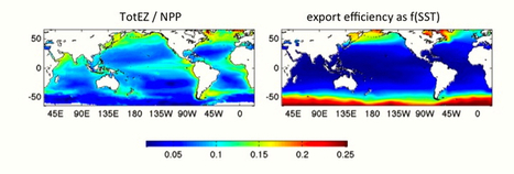 Ocean Food Web Key in Global Carbon Cycle - The UCSB Current   Energy supply - biofuels - soil science   Scoop.it