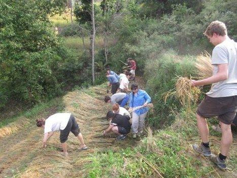 "Review Marilyn Buchanan Volunteer in Kathmandu Nepal Woman Support Program | ""#Volunteer Abroad Information: Volunteering, Airlines, Countries, Pictures, Cultures"" | Scoop.it"