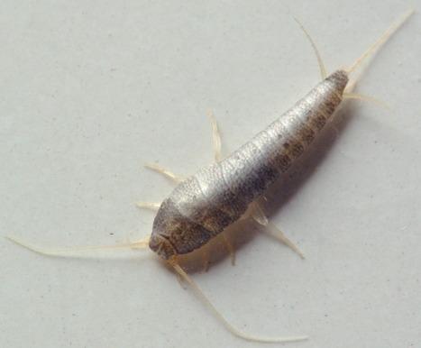 6 - Un TP, un article: La Croisière ça Mue | EntomoScience | Scoop.it
