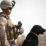 Caring for War Dogs - paramedics receive training to treat canines in combat settings | Dogs and People | Scoop.it