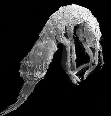 Collemboles : trois espèces nouvelles pour la science | Chronique d'un pays où il ne se passe rien... ou presque ! | Scoop.it
