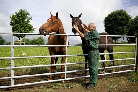 Retired racehorses that may have been abused, injured come to Wallkill to be rehabilitated by inmates. | Horse Racing News | Scoop.it