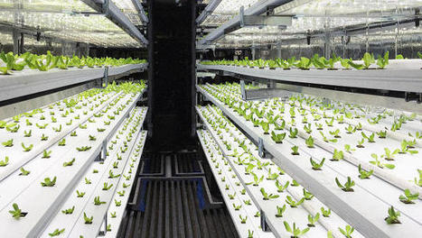 Take A 3D Tour Of A Vertical Farm Packed Inside A Shipping Container | Real Estate Plus+ Daily News | Scoop.it