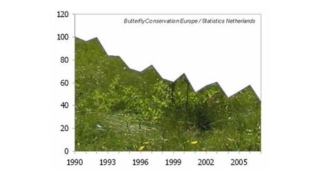 Las mariposas son muy vulnerables al cambio climático | Las Mariposas | Scoop.it