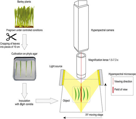 Hyperspectral phenotyping on the microscopic scale: towards automated characterization of plant-pathogen interactions | Plant Biology Teaching Resources (Higher Education) | Scoop.it