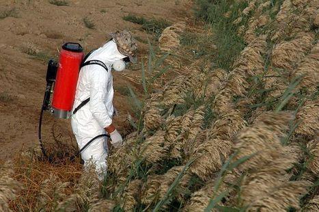[Brésil] Les pesticides des cultures du soja et de la canne à sucre cancérigènes ? | Autres Vérités | Scoop.it