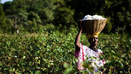 Oumar Diabaté, pionnier de l'agro-écologie au Mali   Questions de développement ...   Scoop.it