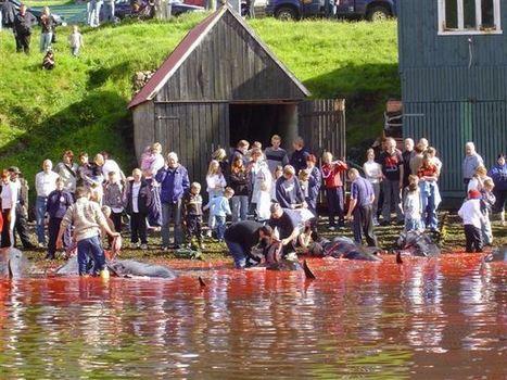 The grindarap: Faroe Islands | Aneddotica Magazine | Scoop.it