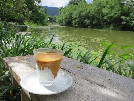 Chiang Mai: A Coffee Lover's Guide - Sprudge | Thai NEWS | Scoop.it