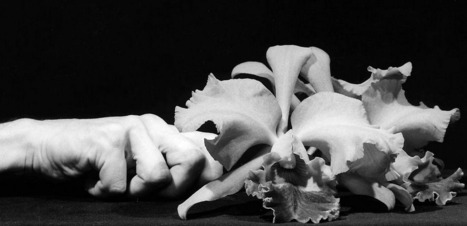 The Robert Mapplethorpe Foundation | artesaniaflorae | Scoop.it