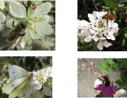 SVT : 65 millions d'observateurs | Insect Archive | Scoop.it