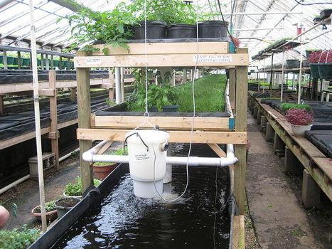 AQUAPONICS!! | Vertical Farm - Food Factory | Scoop.it