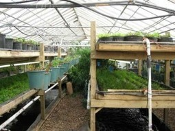 Aquaponics 101 | 5 Reasons Why Aquaponics is Being Called the Future of Food - Will Allen Farms | Aquaponics~Aquaculture~Fish~Food | Scoop.it