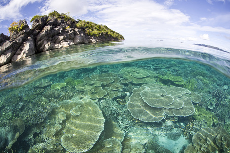 Quick Take: The Ocean is a Global Climate Solution | Conservation | Scoop.it