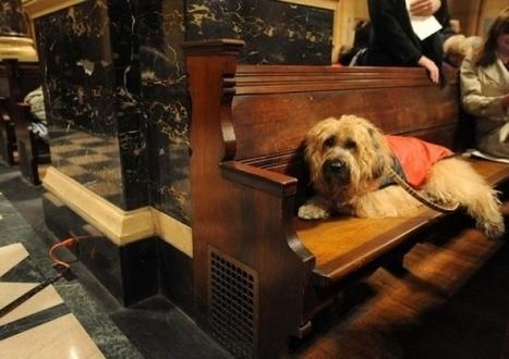 Caniches, chihuahua et chien-loup rassemblés à Paris pour sauver Sainte-Rita | CaniCatNews-actualité | Scoop.it