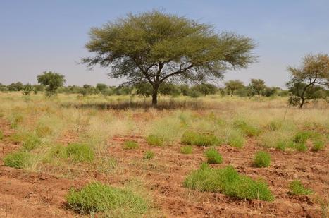 ENSO threatens food supply in southern Africa | Gaia Diary | Scoop.it