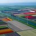 Tulip Fields | Life in Color | Color in Life | Scoop.it