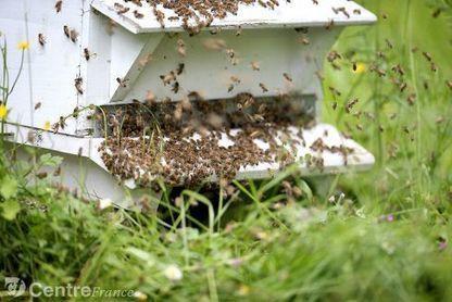 Des vétérinaires mandatés dans la Nièvre pour protéger les abeilles | Services vétérinaires | Scoop.it