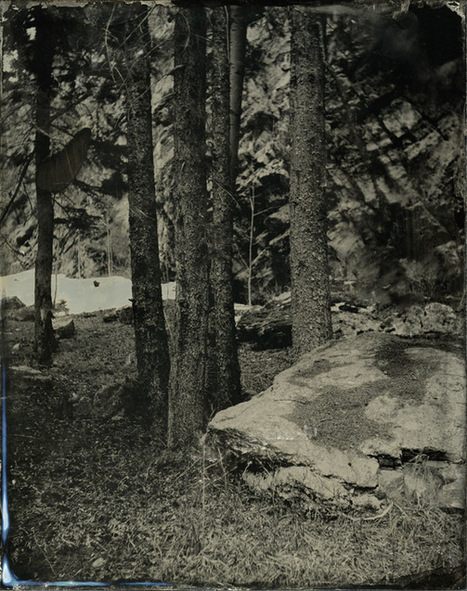 In the Forest - a new 8x10 ambrotype image | L'actualité de l'argentique | Scoop.it