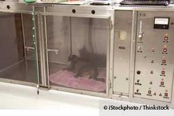 Hyperbaric Oxygen Therapy Helps Speed Up Healing in Animals   Wound Care   Scoop.it