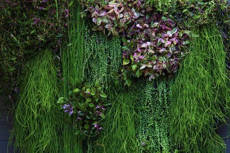 Hanging Around | Balcony Gardening | Scoop.it
