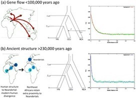 PLOS Genetics: The Date of Interbreeding between Neandertals and Modern Humans | Archaeolog