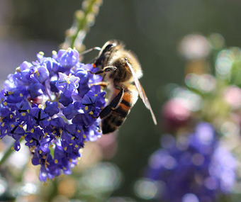 Backwards Beekeepers: Planting for pollinators   Share Some Love Today   Scoop.it