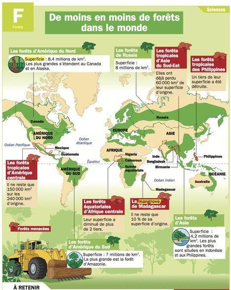De moins en moins de forêts dans le monde | HISTORIA Y GEOGRAFÍA VIVAS | Scoop.it