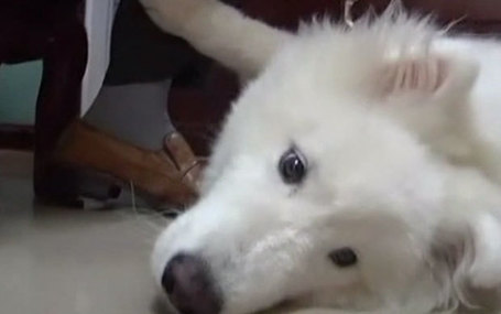 Chinese dog is 'maths genius,' according to owner | Quite Interesting News | Scoop.it
