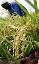 Des ONG dénoncent le rôle de la Banque mondiale dans l'accaparement des terres paysannes | Questions de développement ... | Scoop.it