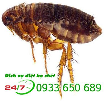 Công ty dịch vụ diệt bọ chét uy tín chuyên nghiệp giá rẻ tại tphcm   Dịch  vụ diệt côn trùng   Scoop.it