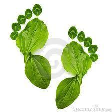 Educação Ambiental | Biologia diario | Scoop.it