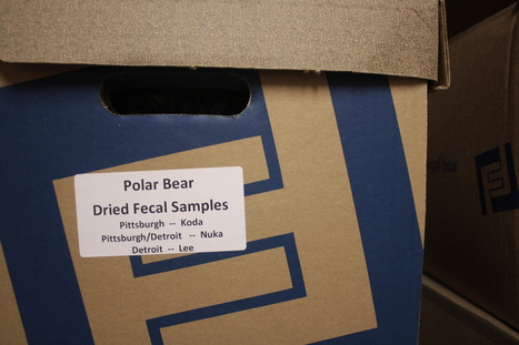 The science behind Elvis and the polar bears - WVXU   polarbear stuffs   Scoop.it