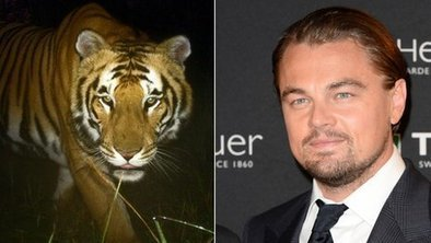 DiCaprio donates $3m to save tigers   earthmergency   Scoop.it