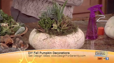 DIY Pumpkin Projects-Adding Succulents | San Diego 6 | San Diego Living | Annie Haven | Haven Brand | Scoop.it