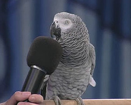 Un perroquet conseille le ministère de l'Intérieur | Vincent Nouzille, les lobbies qui nous gouvernent | Scoop.it