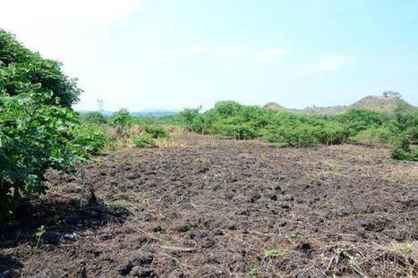 El humedal que añoran los piedrunos - El Nuevo Dia (Colombia)   Estudios de impacto ambiental   Scoop.it