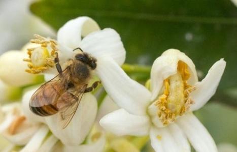 Le Parlement des enfants veut interdire les pesticides pour créer des «autoroutes pour abeilles» | Biodiversité | Scoop.it