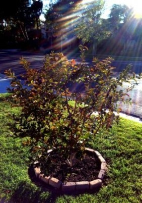 Tips for watering new trees - ways to improve water management | Annie Haven | Haven Brand | Scoop.it