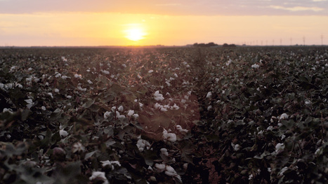 Native sun: In the Deep South, a solar farm rises on a former cotton plantation | North Carolina Agriculture | Scoop.it