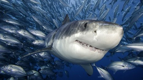 Your Customers Are Sharks   Social Media   Scoop.it