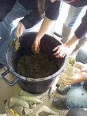 Devenir vigneron: On s'occupe des vignes à Viaud | Vins et Vignerons | Scoop.it