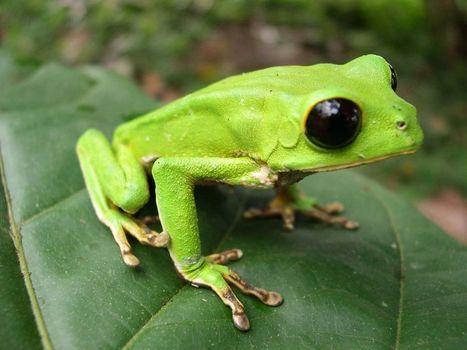 Pictures: Peru Park Boasts Highest Diversity of Amphibians and Reptiles | Rainforest EXPLORER:  News & Notes | Scoop.it