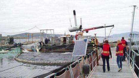 CSIRO weather model a boost for aquaculture   aquaculture   Scoop.it