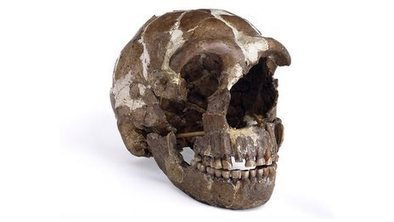 Neanderthals gave us disease genes | Living in Groups: Animal Behaviour and beyond | Scoop.it