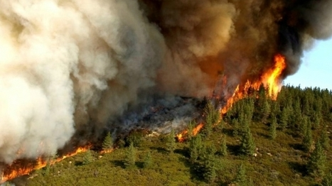 California's Forests Have Become Climate Polluters | Climate Central | Science Policy | Scoop.it